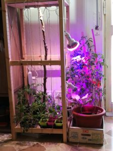 pomodoro indoor